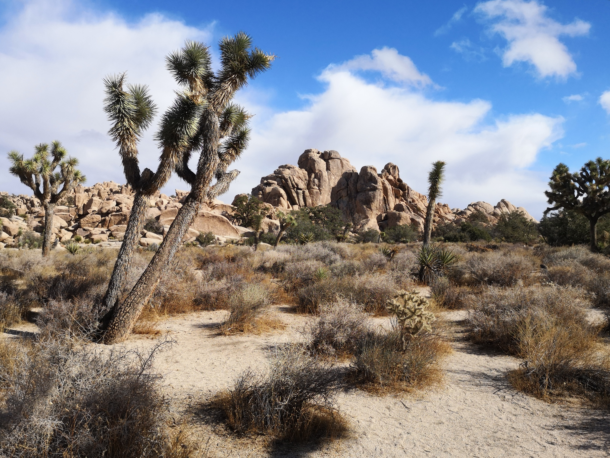 road trip californie joshua tree